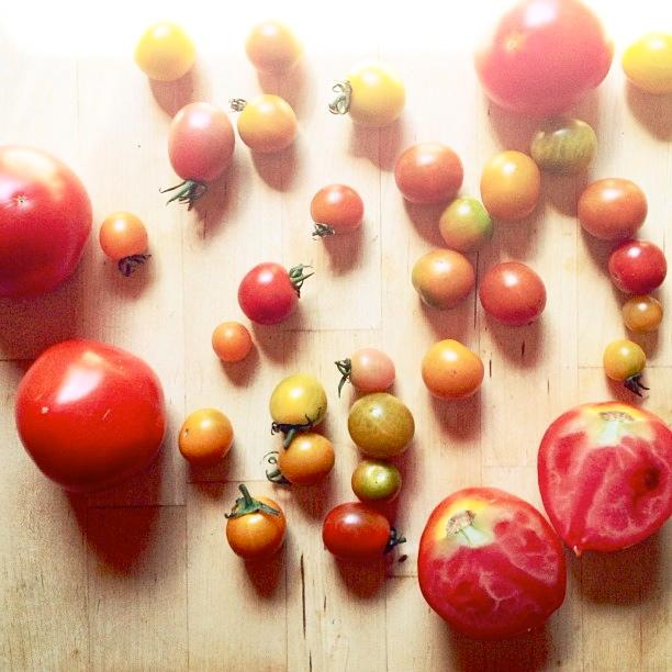 tomatoes.gardn